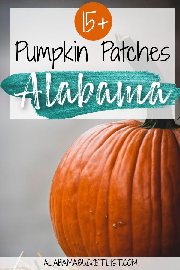 Best Pumpkin Patches In Alabama Alabama Bucket List In 2020 North America Travel Destinations Best Pumpkin Patches Usa Travel Guide