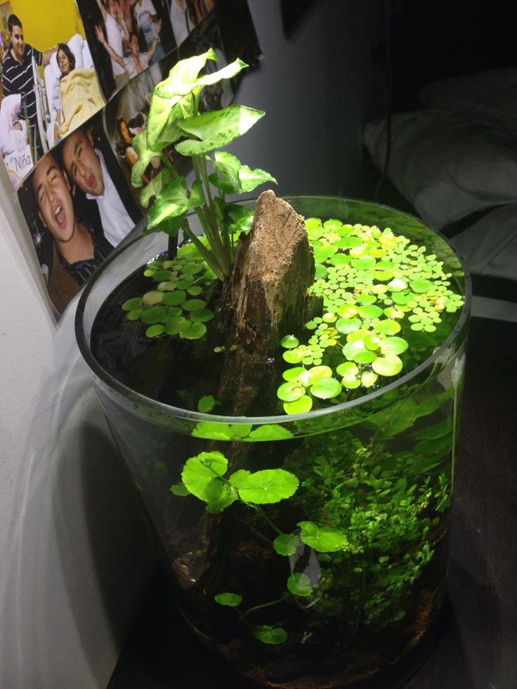 159 best images about mostly small gardens under glass on for Plante nano aquarium