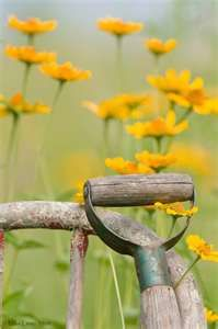 Country life: Country Scene, Country Gardens, The Farms, Country Living, Country Life, Old Chairs, Life Photography, Yellow Flower, Summer Flower
