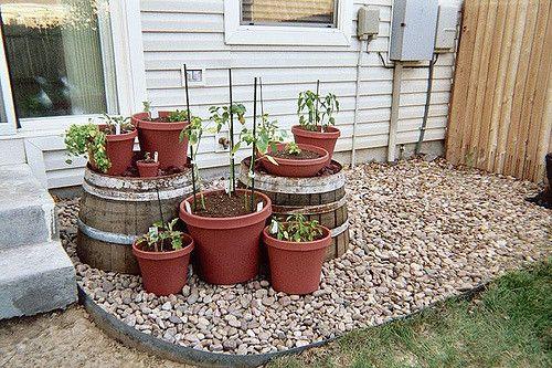 Conheça 10 vegetais que podem ser plantados em contentores e transforme a beleza da sua casa.