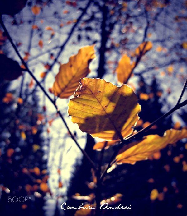 Yellow particles - Autumn feeling, Constanta, Romania