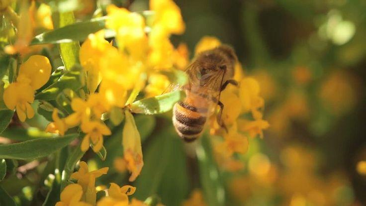Energie des abeilles (L')