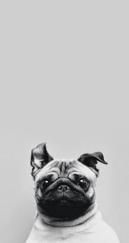 Perro asustado | Fondos para iPhone