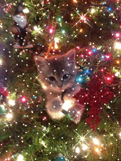 Cat seeing stars gifs gif cute cats moving images cat gifs tree holidays christmas gifs christmas tree decorated trees
