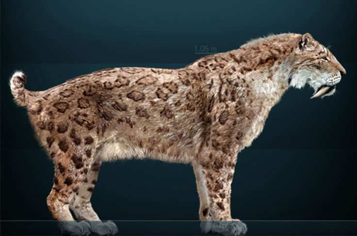 Tigre-dentes-de-sabre (Smilodon fatalis) - animal extinto
