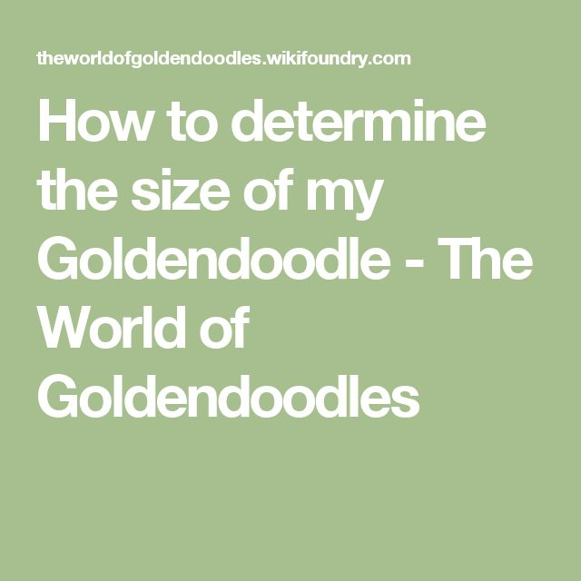 How to determine the size of my Goldendoodle - The World of Goldendoodles