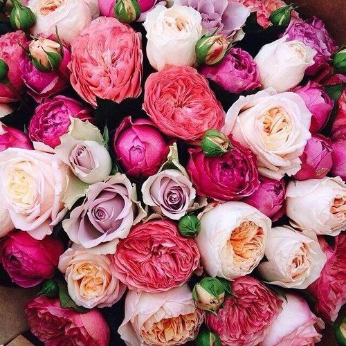 Pink Peonies  Roses.