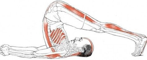 17 best images about pilates anatomy on pinterest  yoga