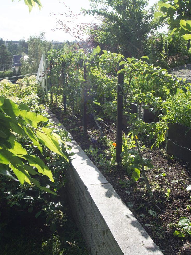 Epletrær kan formes og klippes - og vips har du et unikt element som er perfekt for små hager!