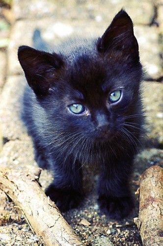 Conseils sur les problèmes urinaires du #chat par le #blog #zoomalia