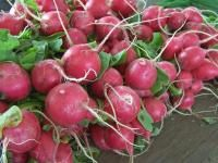Okra: Planting, Growing, and Harvesting Okra Plants   The Old Farmer's Almanac