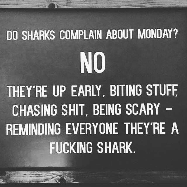 Haha wonder if sharks hate Monday's though?