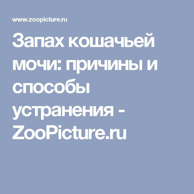 Запах кошачьей мочи: причины и способы устранения - ZooPicture.ru