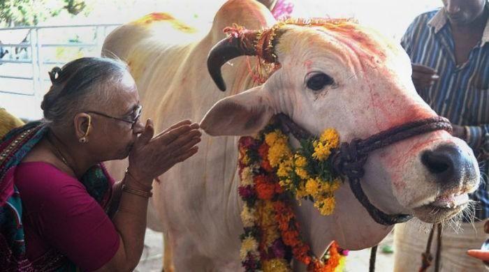 Muslim man dies after attack by cow vigilantes in India - https://www.pakistantalkshow.com/muslim-man-dies-after-attack-by-cow-vigilantes-in-india/ - https://www.geo.tv/assets/uploads/updates/2017-04-05/l_136900_045434_updates.jpg