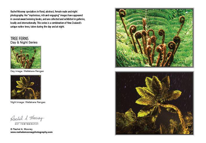 Photography Card-NZ Native Tree Ferns