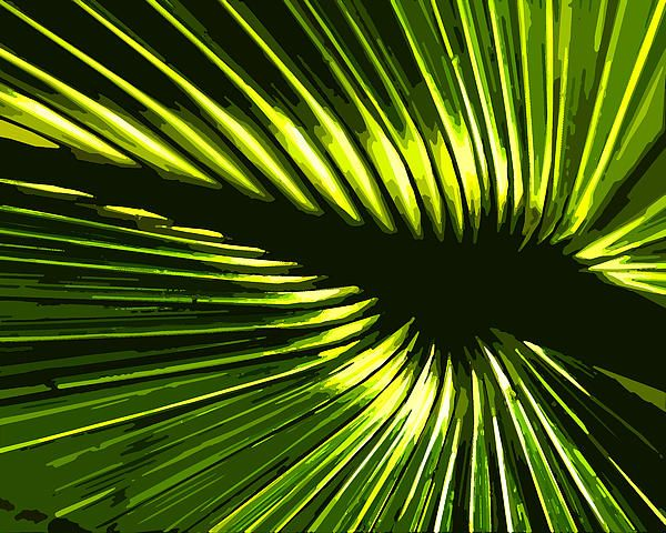 The sun was shining through this cabbage palm leaf in Aldermans Ford Park in Lithia, Florida.