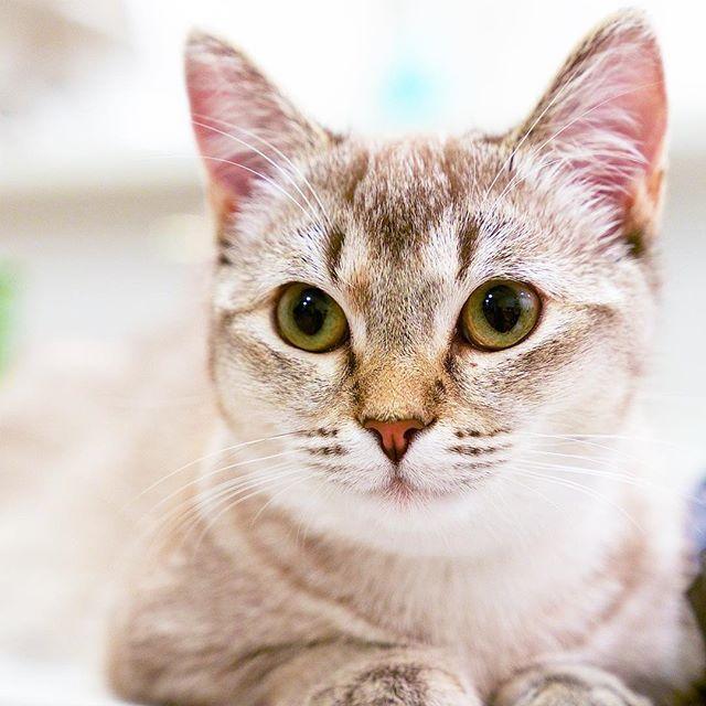 Ist sie nicht die süßeste Katze aller Zeiten? MIA xx – Maisy stuff – #di …   – Adorable Kittens