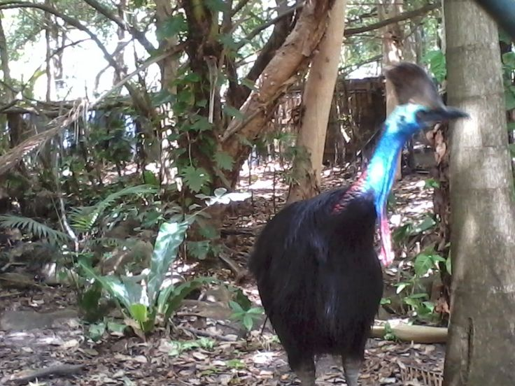 Amazing Places that i have been Sites and facts :) : Cairns Tropical Zoo