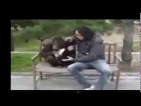 Video Lucu Tingkah Laku Orang Utan http://www.youtube.com/watch?v=941jVbzPhBc&feature=youtu.be