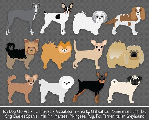 Toy Dog Clip Art, digital foo foo dogs, small dog breeds, chihuahua, min pin, pomeranian, yorky, pug, maltese, pikingese, Buy 2 Get 1 Free