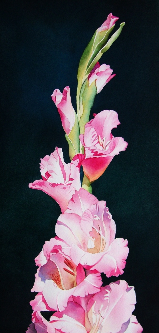 75 best Paintings of Gladioli images on Pinterest ...