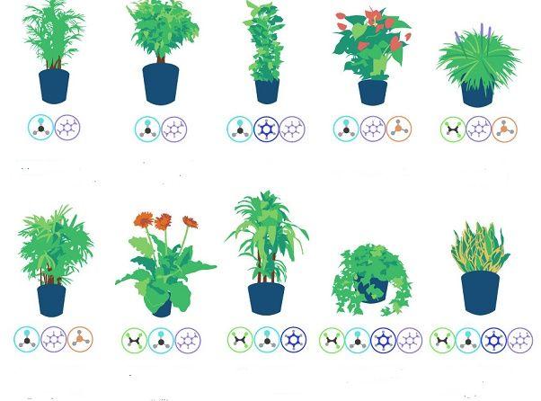 Você sabia que algumas plantas têm forte capacidade purificadora do ar? Todas as plantas, é verdade, ajudam a melhorar a qualidade do ar. Mas algumas são especiais.
