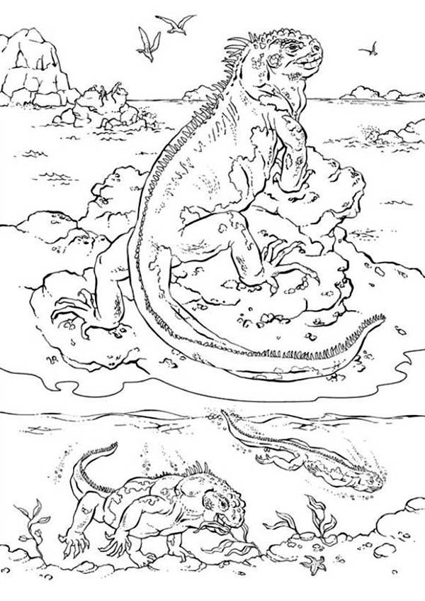 Iguana Sea Iguana Coloring Page For Kids Jpg Coloring Pages Animal Coloring Pages Online Coloring Pages