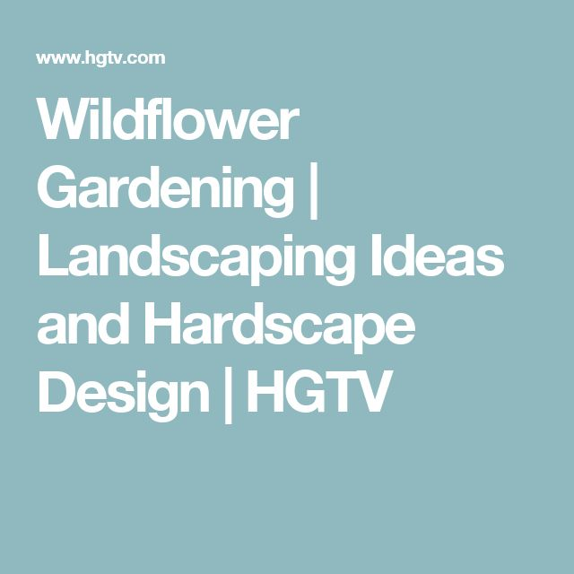 Wildflower Gardening   Landscaping Ideas and Hardscape Design   HGTV