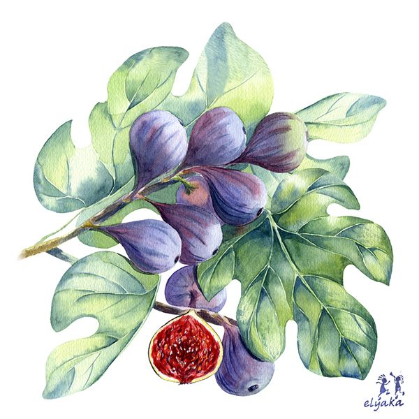 Watercolor fruits and berries on Behance