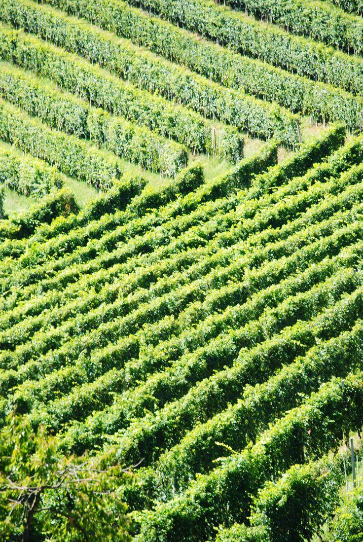 Vineyards in Barbaresco, PIemonte (Italy) #wine #Piedmont