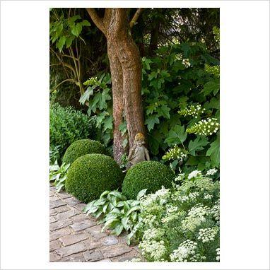 Resultado de imagem para buxo jardim
