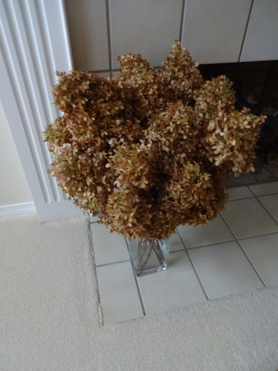 Hydrangeas Dried Limelight Home Decor Shabby Chic Flowers Floral Supplies For Arrangements