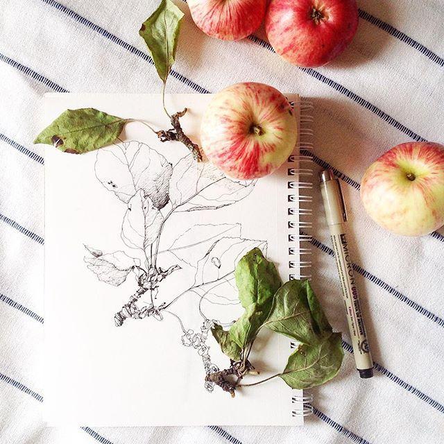 Вчера гуляли по яблоневым садам, сколько красоты вокруг, которую мы зачастую не видим. И какая прохлада сегодня! Август пахнет свежим ветром и яблоками #sketch#art#artist#drawing#painting#misha_illustration#набросок#artblog#artgallery#illustration#иллюстрация#август#artwork