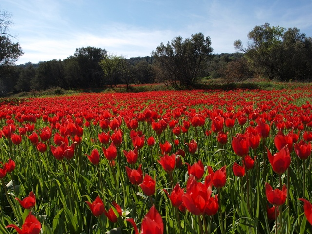 Springtime in Chios Greece