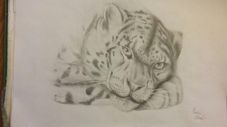 Leopardo    7ore e 20 Micol Marini