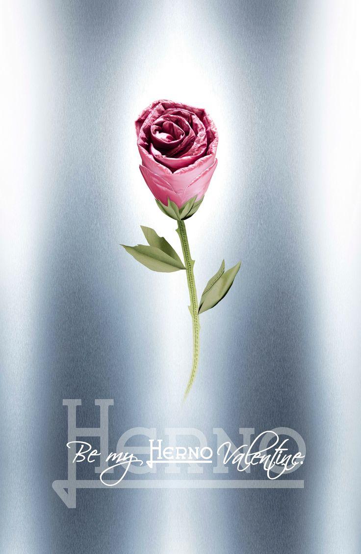 Be My Valentine! ❤  #Herno #BeMyValentine #Happy #ValentinesDay #Regalaunarosa #givesroses #love #amore #SanValentino