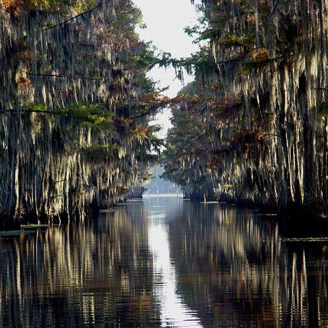 Inverno'15 | Lusiana Swamp Na foz do Rio Mississipi está o estado de Louisiana, de onde traduzimos o tema da coleção que traz à tona as histórias folclóricas do povo sulista e dos icônicos pântanos americanos. A natureza misteriosa, repleta de répteis e lírios, inspirou as estampas desse momento da coleção! #bobstoreinverno15