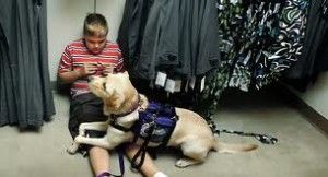friendshipcircle: Have you ever thought about getting a service dog to help you or a loved one? What about a therapy dog for school or an emotional support companion dog for home? Here's a guide to the different types of service dogs and a few of the organizations that train both dogs and owners.