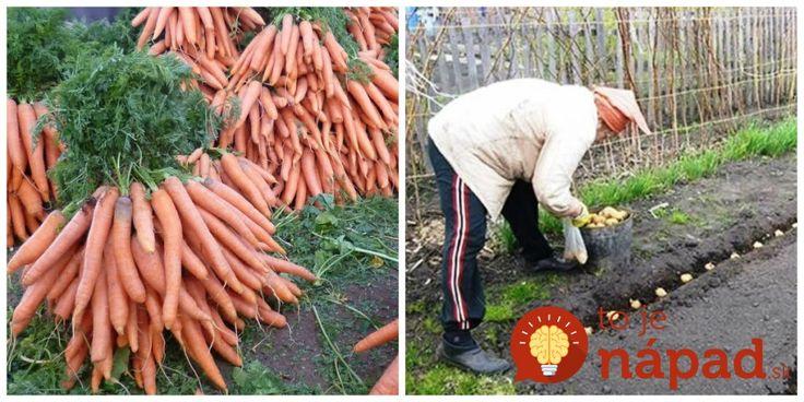 Kým budú všetci sadiť priesady, vy už budete zberať úrodu: Vysaďte po lete tieto druhy a na jar sa máte na čo tešiť!