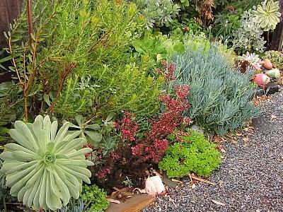 outdoor succulent garden. 242 Best Succulent Outdoor Design Ideas Images On Pinterest | Garden Deco, Decorations And Backyard Patio N