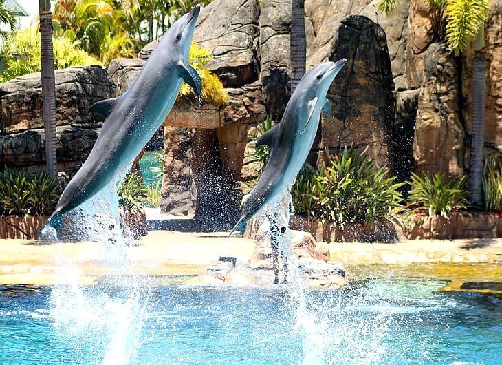 Sea World, Gold Coast, Australia: http://www.ytravelblog.com/things-to-do-on-the-gold-coast/