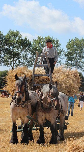 Foto's - Stichting 'Het Werkend Trekpaard'