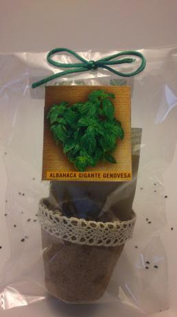 379 mejores im genes sobre hierbas arom ticas culinarias - Cultivar lavanda en casa ...