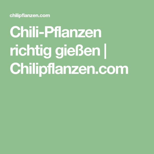 Chili-Pflanzen richtig gießen | Chilipflanzen.com