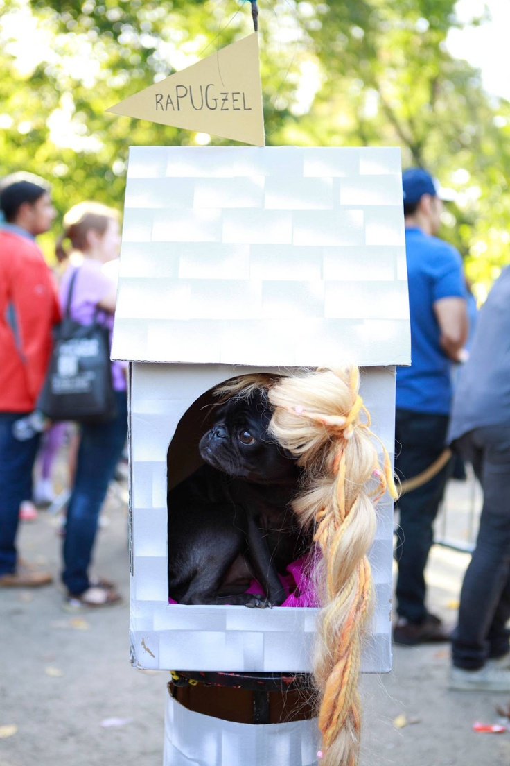 Forty-five Dogs in Cute Costumes - The Cut - Rapugsel