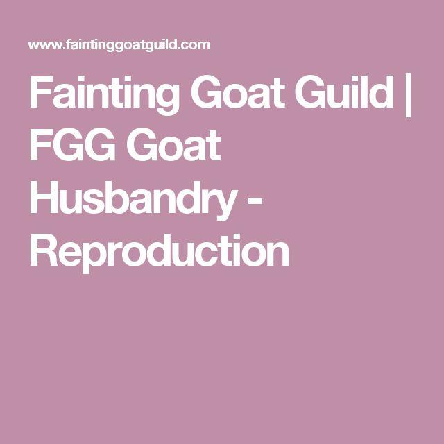 Fainting Goat Guild   FGG Goat Husbandry - Reproduction