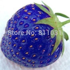 Venta caliente 100 unids/bolsa azul strawberry rare fruit vegetable seed planta de los bonsai home garden envío gratis
