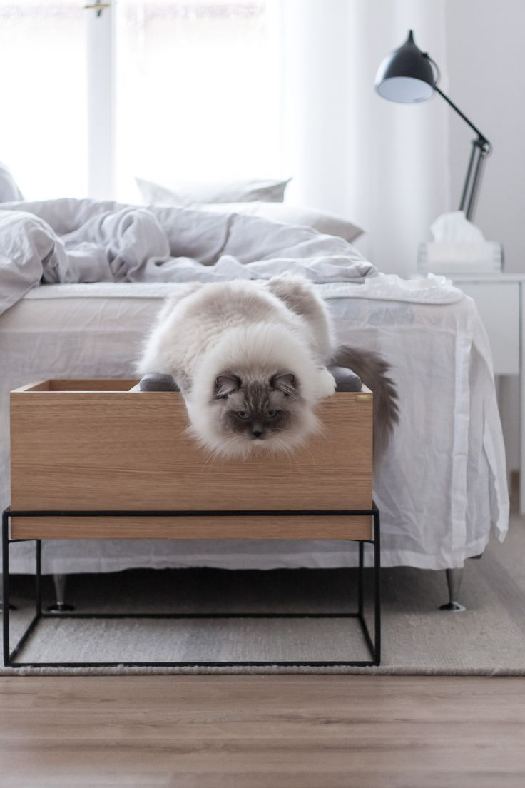 Ragdoll cat on a Hübsch storage bench.