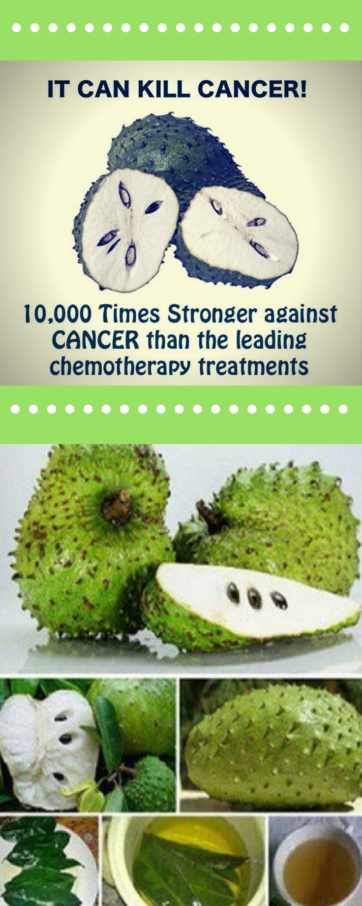 Among all the healthy products out there, there is one plant, whose leaves will bring health benefits like you never imagined before! Soursop leaves are 1,000 times stronger in the fight against ca…