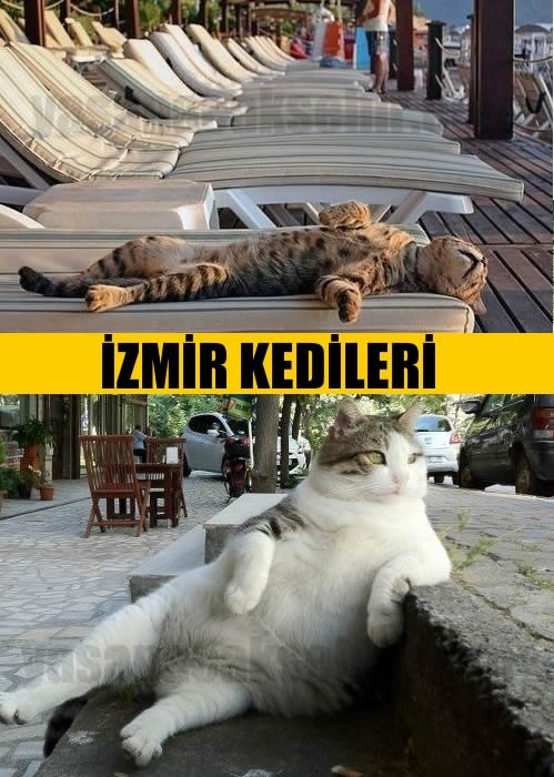 """Cats of Izmir, Turkey - there are many! And they are always hungry! :-)  """"İzmir kedileri"""""""